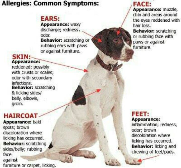 Common symtoms of allergies