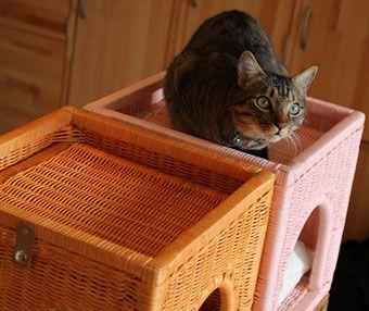 犬 猫のベッド ラタンキューブハウス シンシアジャパン モデル猫
