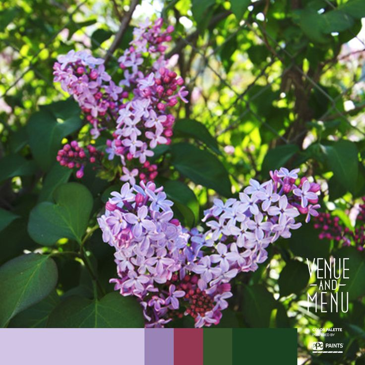 "Scent of Lilac - ""The smell of moist earth and lilacs hung in the air like wisps of the past and hints of the future."" - Margaret Millar"