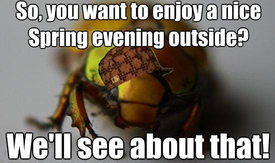 Funny Memes June : Scumbag june bugs i hate you quot end quote pinterest