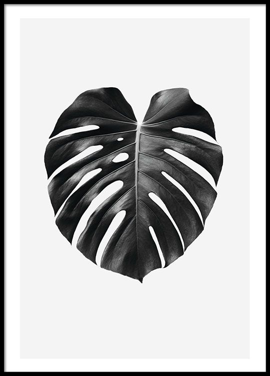 Black and white print with monstera