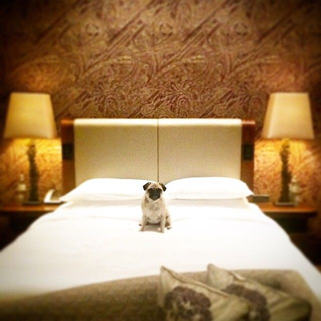 Traveling with an adorable pup aside. #MYLUXLIST | Park Hyatt