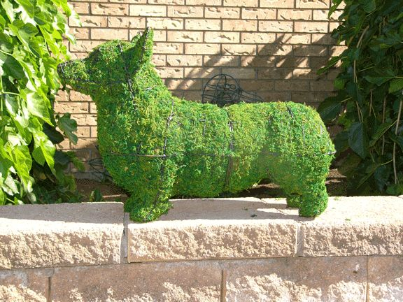 Corgi topiary ... or one that got very moldy!