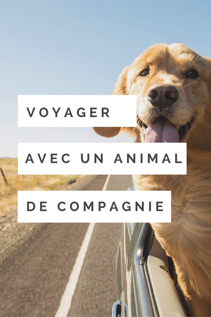 En avion, en train, ou en voiture, il est désormais facile de voyager avec votre animal de compagnie… À condition de prendre quelques précautions.