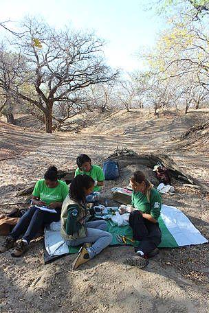 WWF Brasil - Na Caatinga, jovens voluntários preparam a volta da ararinha-azul