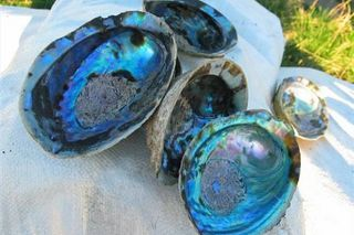 How to Clean & Polish Abalone Shells (4 Steps) | eHow