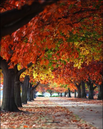 Autumn Path, Canberra.