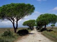 Tuscany Vacation