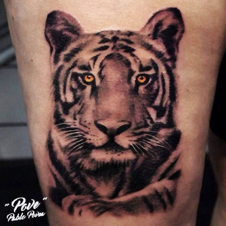 TIGRE TATTOO REALISMO #povetattoo #veneno_irons_original #tattoo #tatuaje #ink #inked #malagatattoo #malaga #realismo #realismtattoo #realistictattoo #tiger #tigre #tigertattoo #girltattoo #guytattoo #inkedgirl #inkedman #tattooartist #tattooed #tattoolife #inkedmag