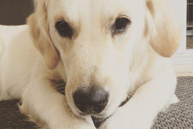 Meine Gedanken zum Thema Kastration beim Hund