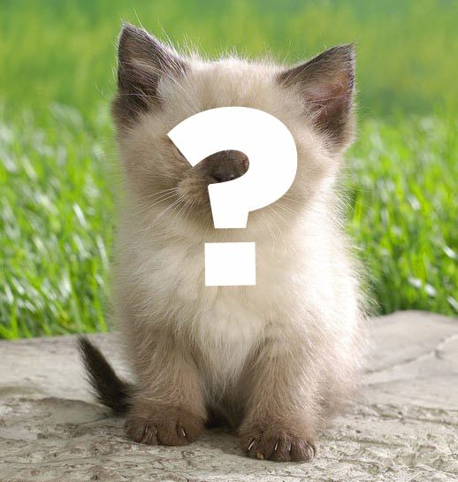 What kind of cat are you? Take this quiz and find out!