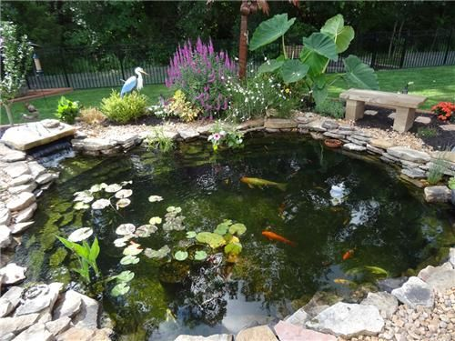 Pond Supplies for garden ponds, water gardens, pond pumps, pond filters and uv lights.