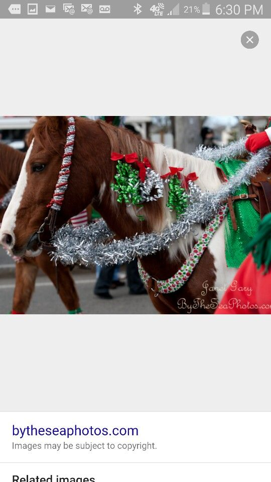 19 Best Images About Horse Costume On Pinterest Dragon