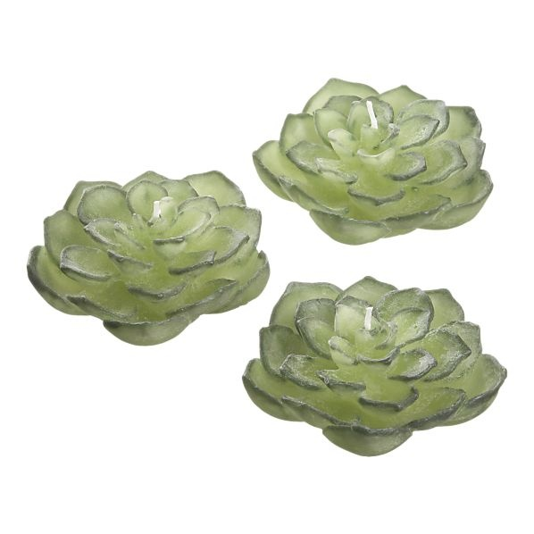 Save on these succulent floating candles from Crate & Barrel with coupons: http://www.coupons.com/coupon-codes/crate-%26-barrel/