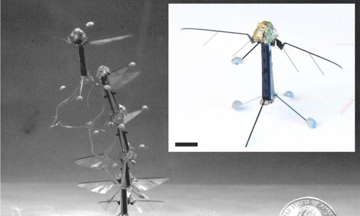 Flight of the Robo-fly: World's smallest drone weighs less than a gram