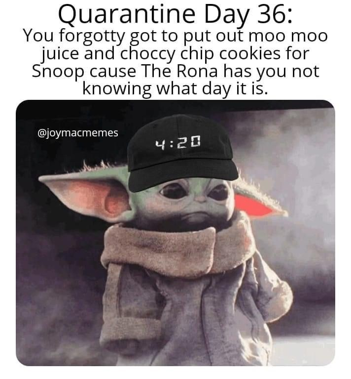 Pin By Sara Gernedl On Baby Yoda Yoda Funny Yoda Meme Kid Memes