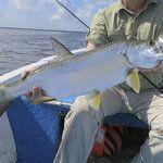 10 mejores atracciones en Isla Holbox, Quintana Roo: Descubre en TripAdvisor 1,368 opiniones de viajeros y fotos de 19 cosas que puedes hacer en Isla Holbox