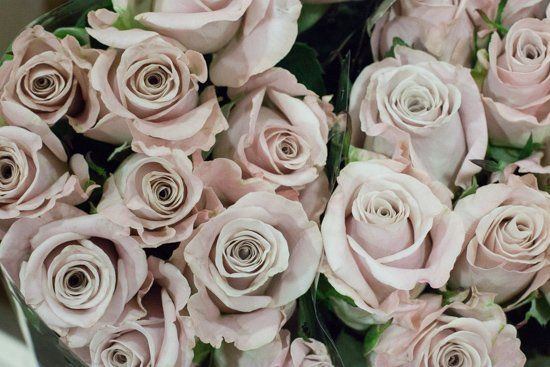 Light pink 'Menta' rose at New Covent Garden Flower Market - April 2015