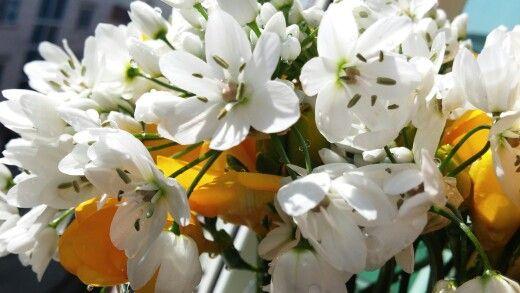 지은이가 사온 꽃