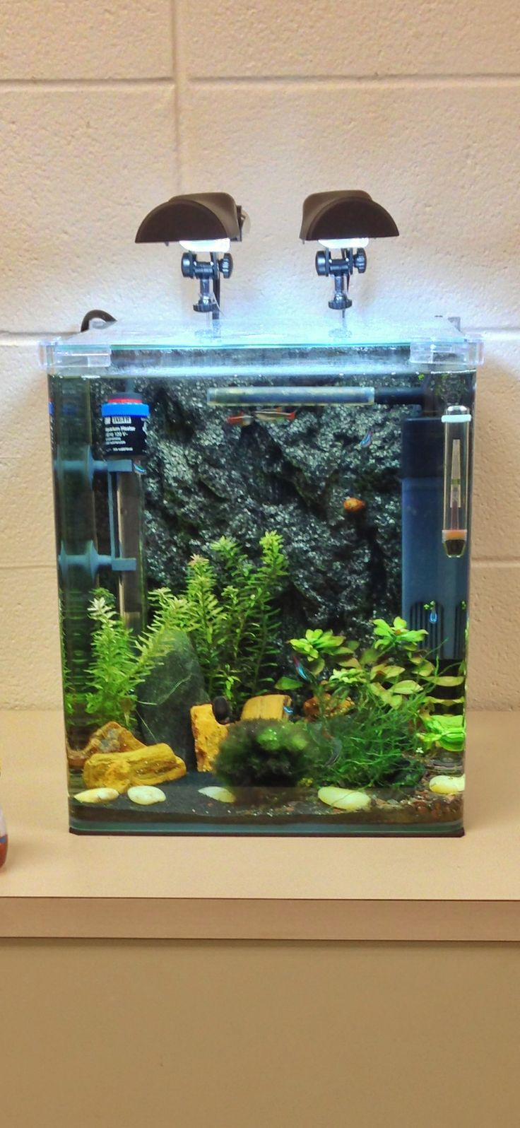 Fish tank for the office - The Office Tank