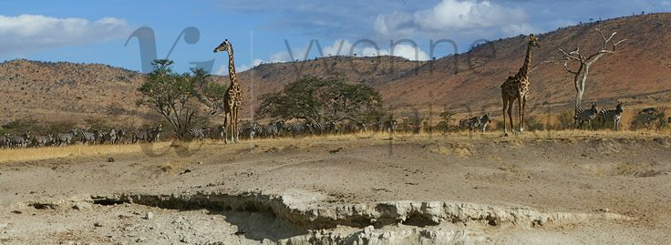 Kenia - Park Narodowy Amboseli