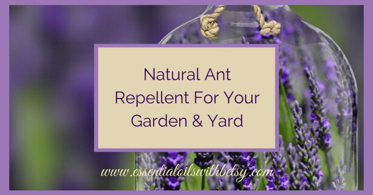 Natural Ant Repellent For Your Garden & Yard Have you been looking for a safe and natural ant repellent? There is an organic way to get rid of ants around your yard and garden. My natural ant spray recipe is easy to make and use. Homemade in about five minutes.