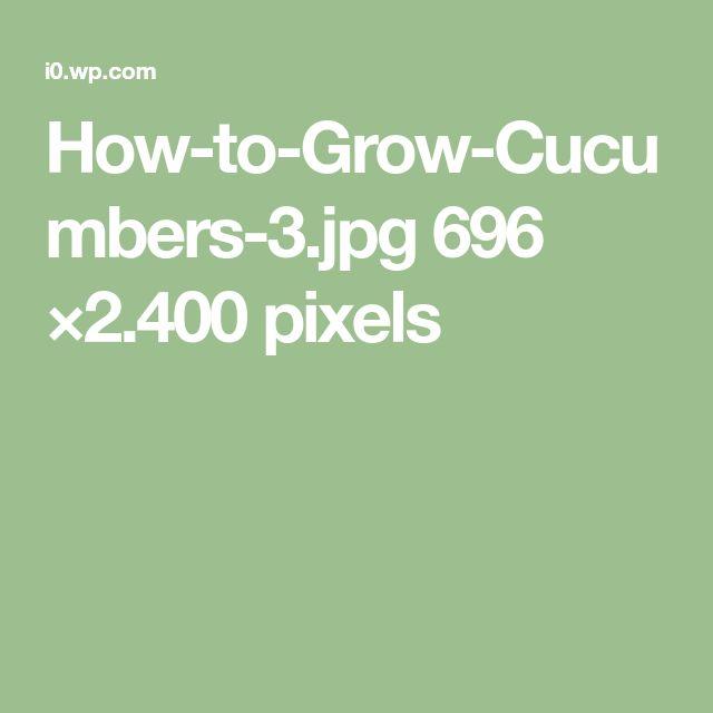 How-to-Grow-Cucumbers-3.jpg 696 ×2.400 pixels