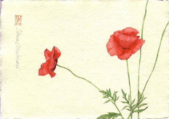 Silvia Molinari  http://www.silviamolinari.it/ DUE PAPAVERI. acquerello su carta a mano, 14x21 cm circa, anno 2012
