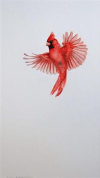 LOVE Laura's native bird artwork! Male Cardinal - In Flight by Laura Kingsbury http://www.laurakingsbury.com/