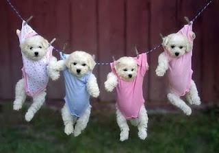 Puppies in onesies