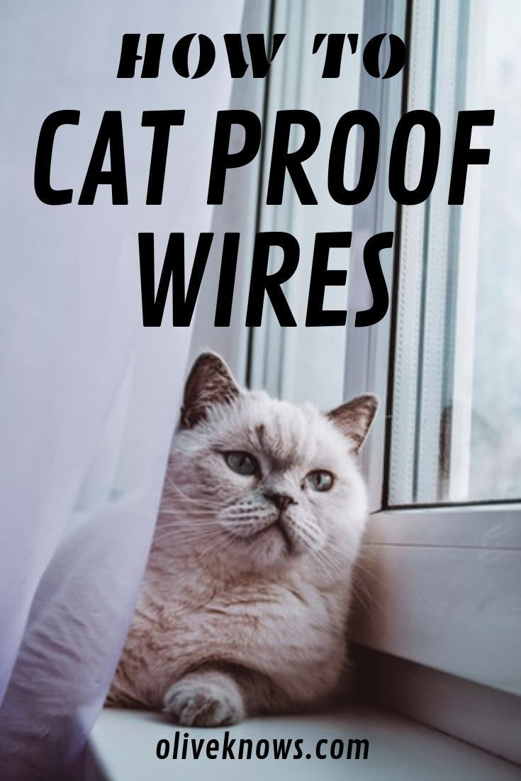 How To Cat Proof Wires Oliveknows How To Cat Cats Cat Proofing