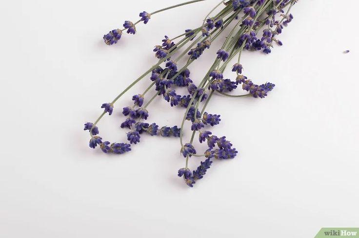 Immagine titolata Make Lavender Oil Step 2