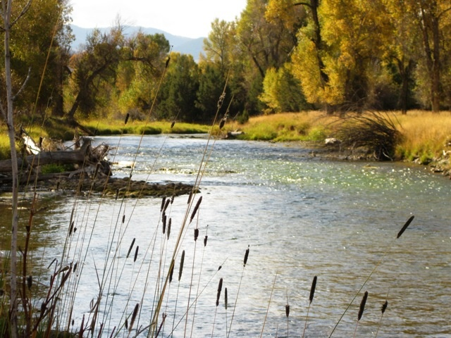 11 best beaverhead river montana images on pinterest for Beaverhead river fly fishing