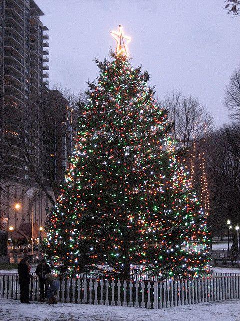 Boston Common Christmas Tree a perfect idea for spending my #perfectbostonholiday