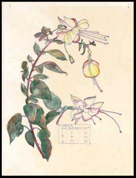 Plant Study ▫ Fuchsia / Walberswick by Charles Rennie Mackintosh (CRM) in collaboration with Margaret Macdonald Mackintosh (MMM) ▫ 1914