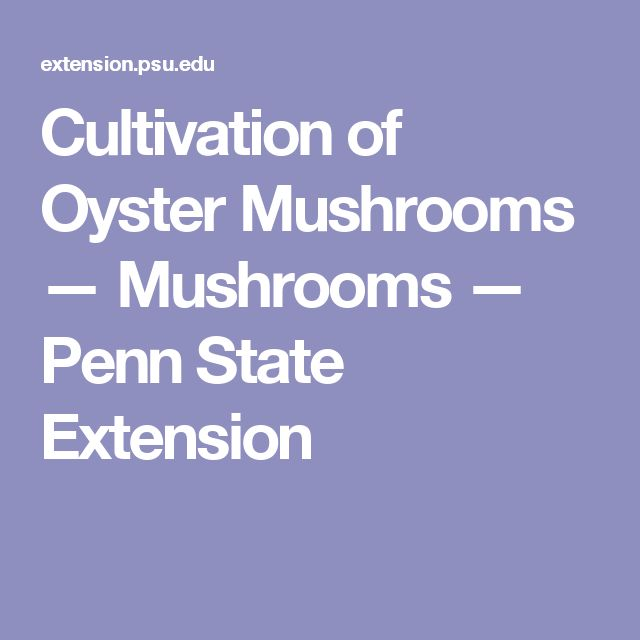 Cultivation of Oyster Mushrooms — Mushrooms — Penn State Extension