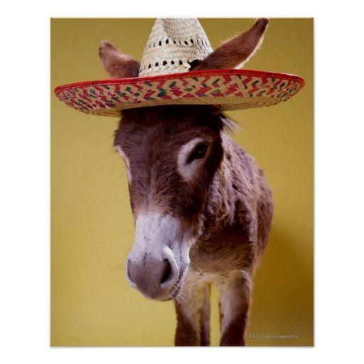 Donkey (Equus hemonius) Wearing Straw Hat Print   Steve ...
