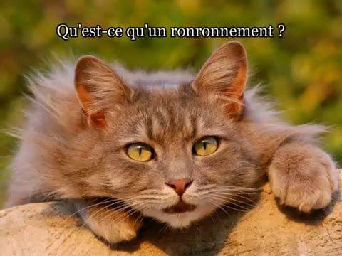 Ronronthérapie quantique - YouTube