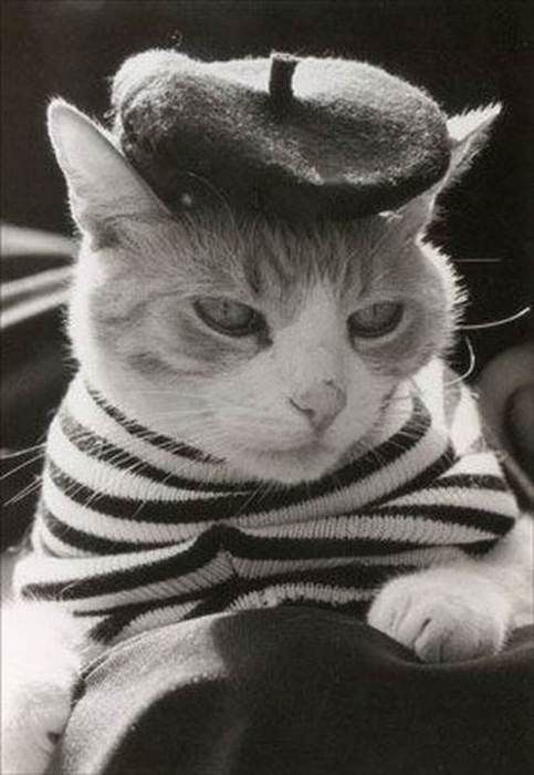 I enjoy modelling and have had a successful career in Paris, I can't help it if some of my feline friends are jealous! :)
