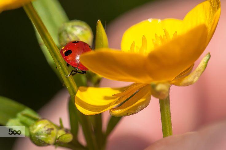 yellow, green  & red by Graziella Serra Art & Photo on 500px