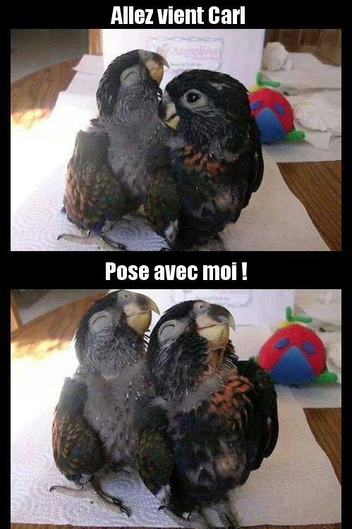 Les oiseaux mannequins