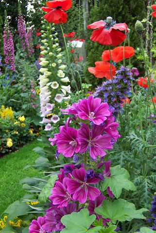 foxgloves, hollyhocks, poppies