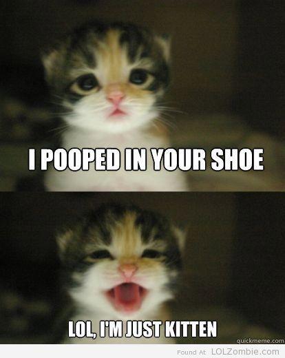 ...just kitten
