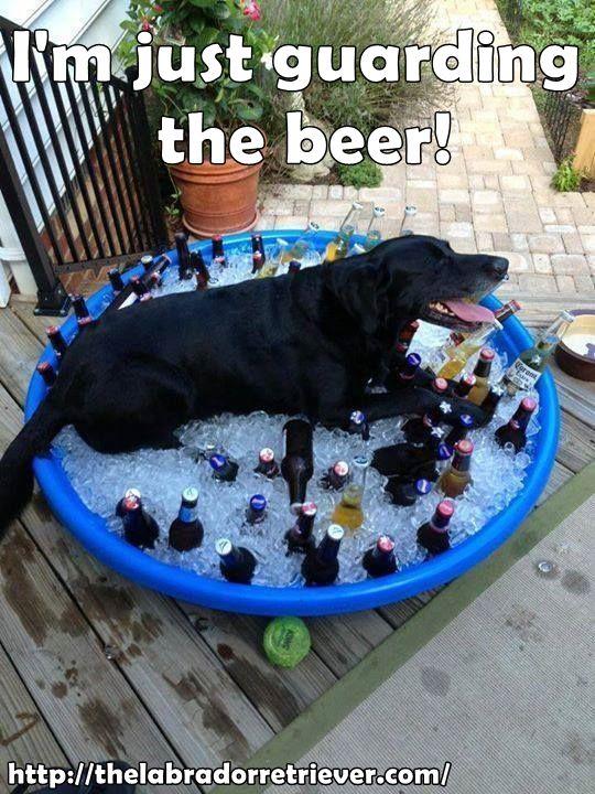 Visit thelabradorretrie... for more great info about Labrador retriever #lab #labrador #dog #memes