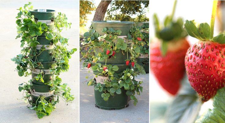 Comment faire une tour de fraises à réservoir!
