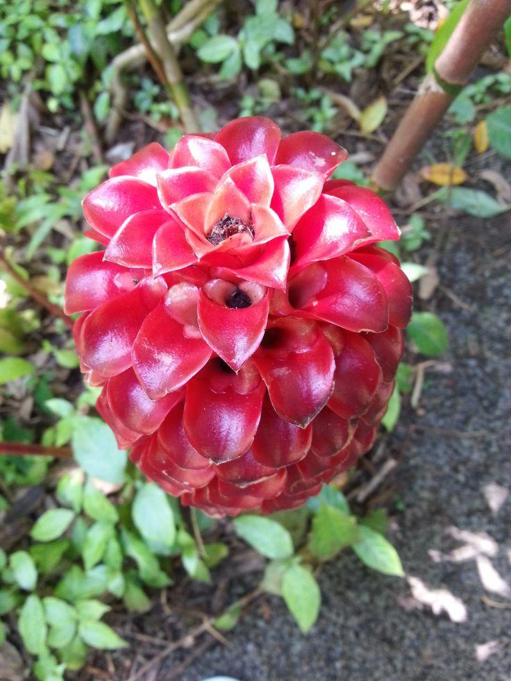 Hawaii botanikuskert  Ámulatba ejtő színek