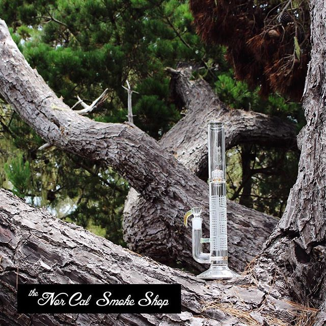 Only in Monterey does @sovereigntyglass grow on trees 🌲 🌳 🌲 . . . . . 📷cred: @seven__seas #montereylocals #csumblocals - posted by The NorCal Smoke Shop https://www.instagram.com/thenorcalsmokeshop - See more of CSUMB in Monterey, CA at http://csumblocals.com