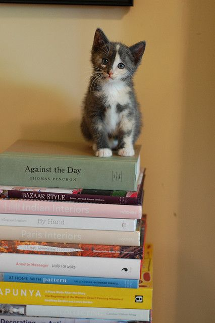 book smart twyla pickett by *lalalaurie, via Flickr