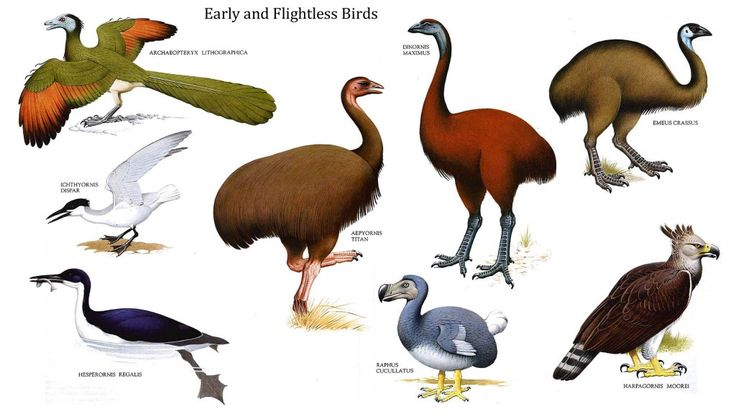 Examples of flightless birds are kakapos, kiwis, takahes and ostriches. Learn fun facts about some of the flightless birds here: http://easyscienceforkids.com/all-about-flightless-birds/