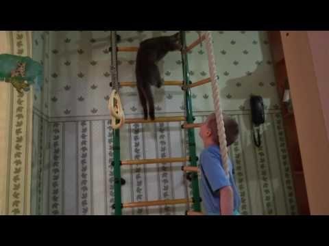 Наше видео на Канал Карусель. Мой кот Кузя спортсмен